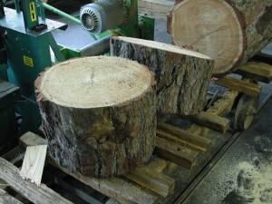 Foto von einem Baumstamm